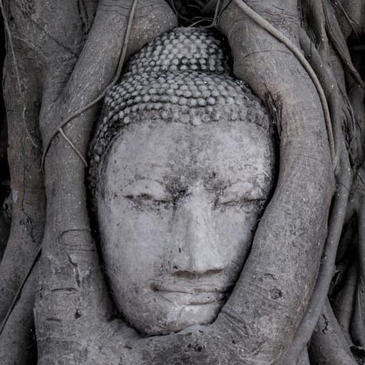 Buddha Gautama- Kopf im Bodhi Baum